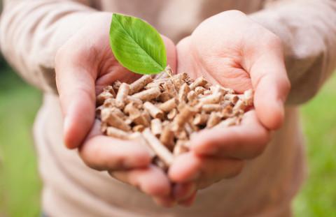 Manos con biomasa