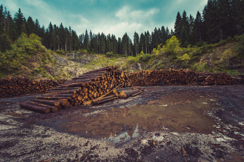 Bosque que se está talando