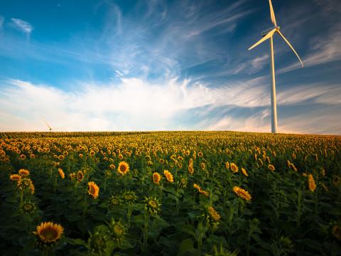 Molino de viento en un campo de flores