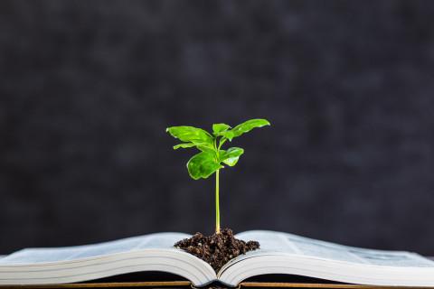 Libro y árbol simbolizando MBA con especialización en  Gestión Ambiental