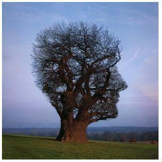 el-salario-emocional-árbol-cabeza