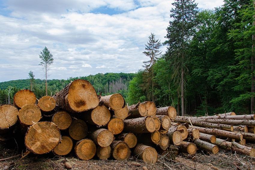 Deforestación  medidas para reducir los daños